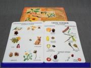 """Коллекция """"Семена и плоды"""" с раздат.материалом"""
