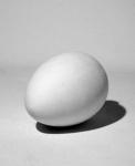 Яйцо. Гипс