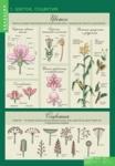 Биология 6 класс Растения, грибы, лишайники