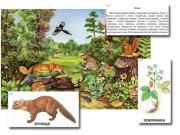 """Магнитный плакат-аппликация """"Лес: биоразнообразие и взаимосвязи в сообществе"""""""