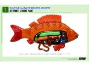 """Рельефная таблица """"Внутреннее строение рыбы"""" (формат А1, матовое ламинир.)"""