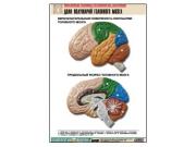 """Рельефная таблица """"Доли полушарий головного мозга"""" (формат А1, матовое ламинир.)"""