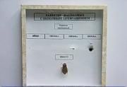 """Коллекция энтомологическая """"Развитие насекомых с неполным превращением"""""""