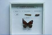 """Коллекция энтомологическая """"Развитие насекомых с полным превращением"""""""