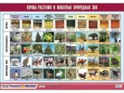 """Таблица демонстрационная """"Почвы, растения и животные природных зон"""" (винил 70x100)"""